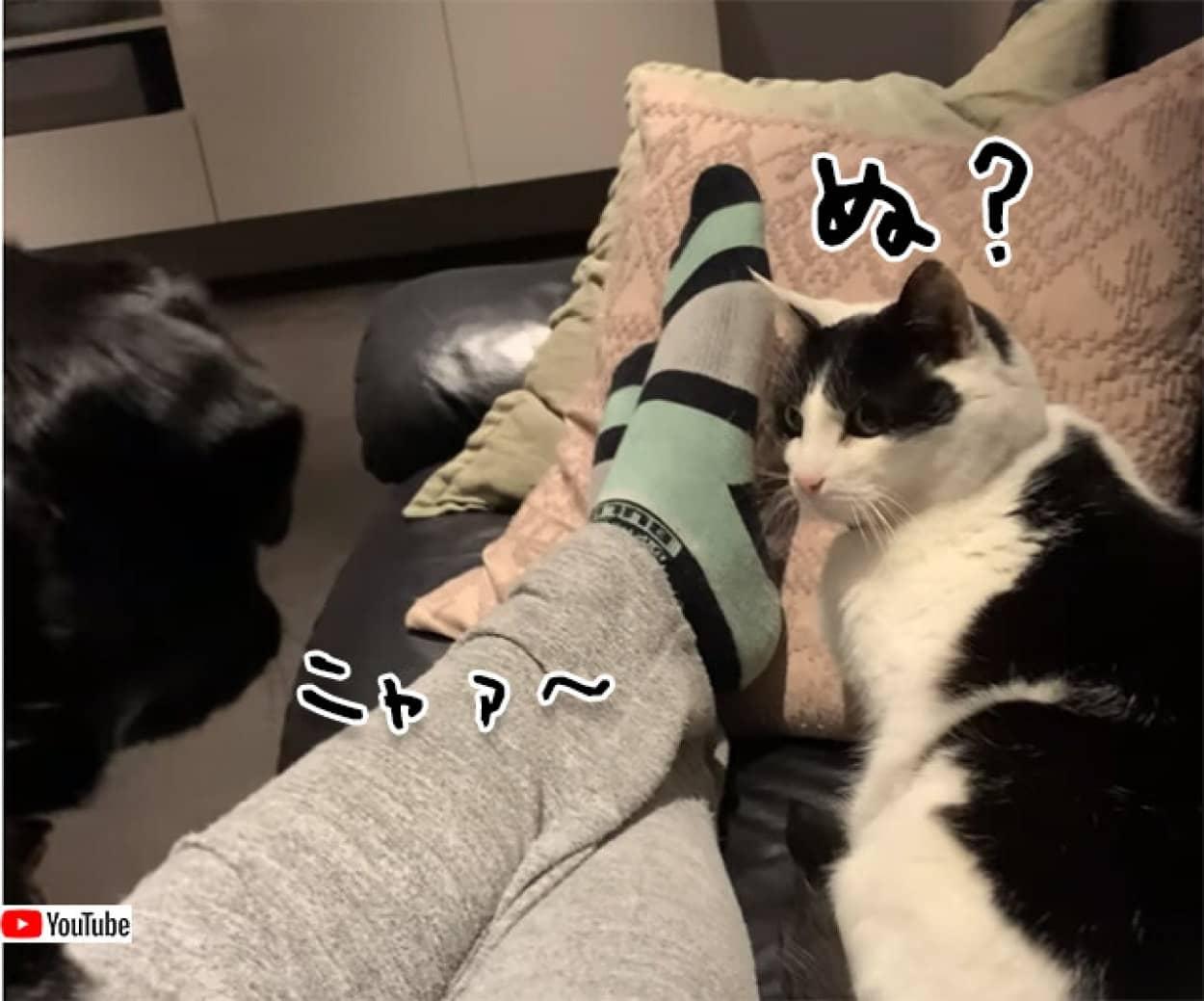 犬語は無視、猫語には応じる猫