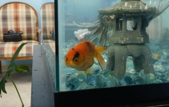 障害を抱え泳げなくなってしまった金魚が、仲間を得て再び泳げるようになるまでも物語(アメリカ)