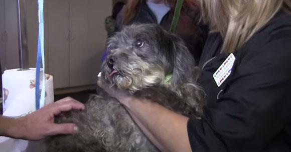 過酷な運命を背負ってきた捨て犬たちと、それを保護する施設の人々に感動のうれしいどっきり