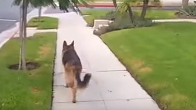 walkingdog2