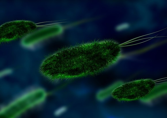 bacteria-106583_640_e