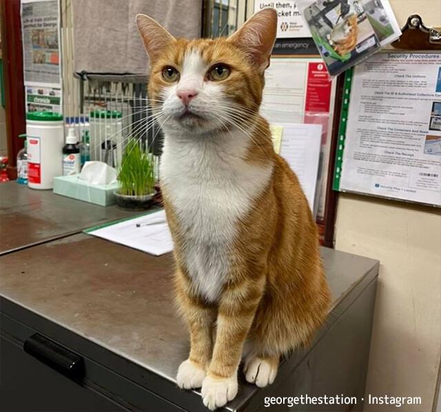 海外へ引っ越しする飼い主から猫を引き取った駅員。職場を共にし猫職員に昇格