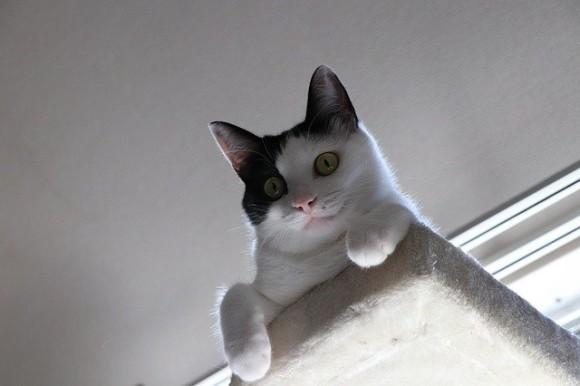 cat-3587525_640_e