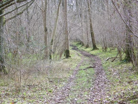 woods_e