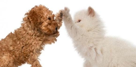 猫や犬の右利き、左利きを見分ける方法
