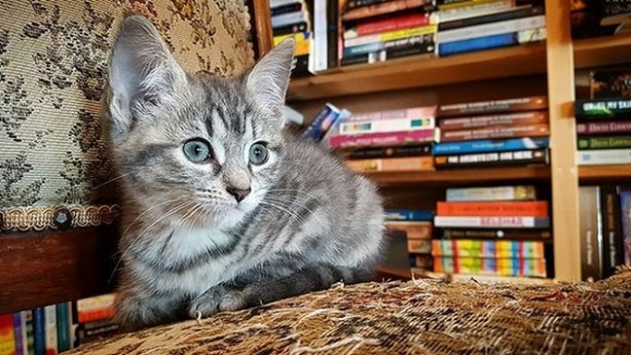 猫好き本好きの聖地!子猫たちが自由に歩き回るブックカフェは、相性の良い猫を引き取ることもできる(カナダ)