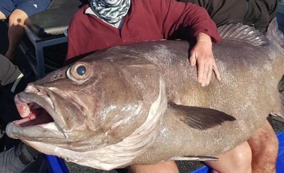 巨大魚ゲットだぜ!いくらなんでもデカすぎるやろ!釣り好きの息子と一緒に釣りに出掛けたお母さん、信じられないサイズの巨大魚をゲットだぜ(オーストラリア)