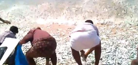 一度でいいから遭遇したい!大量の魚群が押し寄せた取り放題の浜辺(インド)