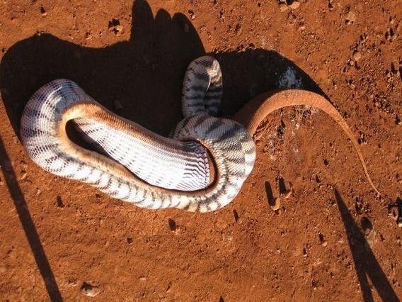 snake_08