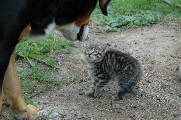 cat-245750_640_e