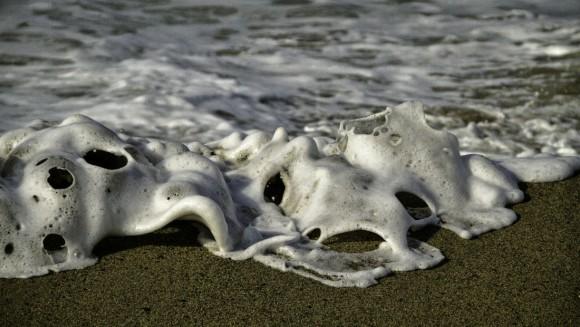 過去10年で海岸に打ち上げられた8の奇妙な生物