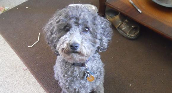 飼い主が悲しいと、ボクも悲しいよ。飼い主をなんとか慰めようとした犬が咄嗟にとった行動が健気すぎて泣けてきた。