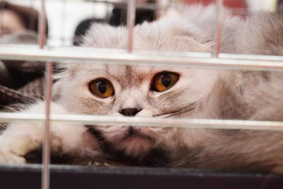 shelter-cat-2754333_640_e