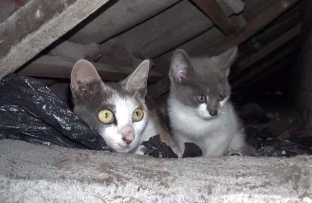 rooftopcat11_e