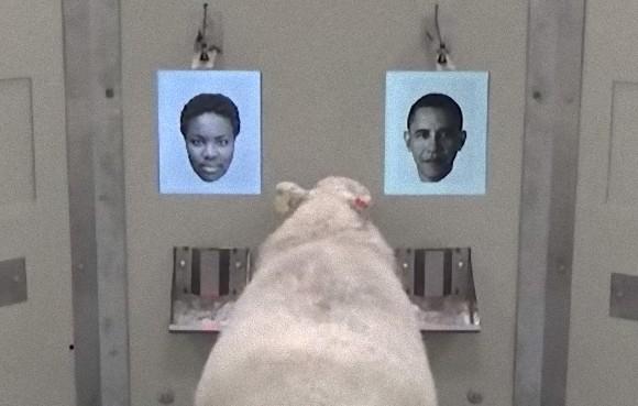 羊は人の顔を識別できる。顔写真を使った実験で判明(英研究)
