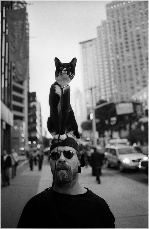 cats_39