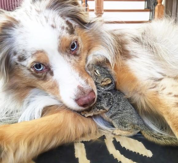木から落ちて救助されたリスの赤ちゃん。保護された家の犬と仲良しになって素敵な友情を築く