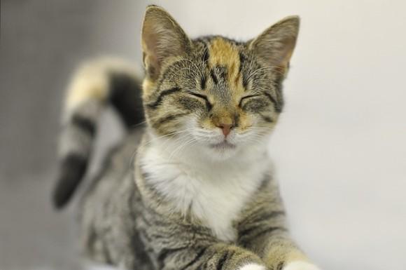 猫を顔認証!世界初、猫専用AI搭載スマートシェルターが誕生