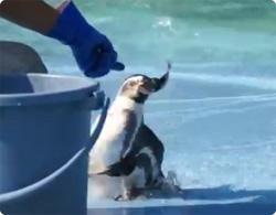 すべりっこペンギン
