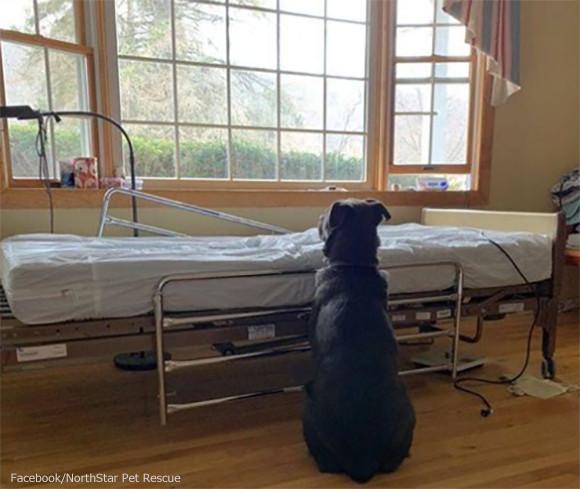 安楽死の危機から救ってくれた飼い主が他界。空っぽのベッドの横で二度と帰らぬ飼い主を待ち続ける犬の物語