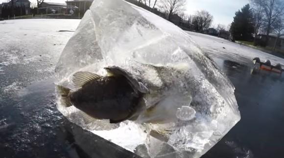 志(こころざし)が半ばすぎた。魚を食べてる最中に氷漬けになってしまった魚