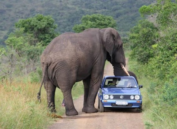 only_in_africa_40