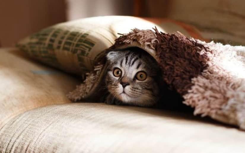 cat-pillow_pixabay