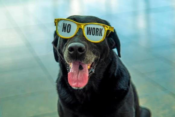 引退する犬へサプライズ