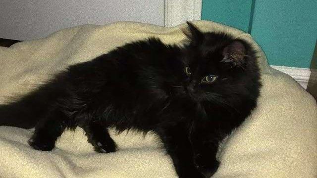 小猫は雪の中寄り添っていた。真っ白い雪に埋もれていた3匹の黒猫が保護される。