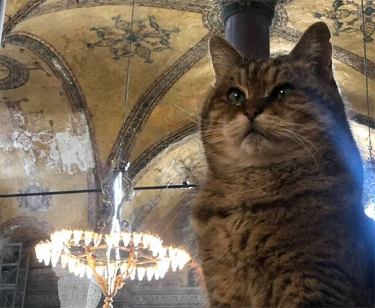 トルコの博物館の猫、グリが亡くなり市長が直々に報告