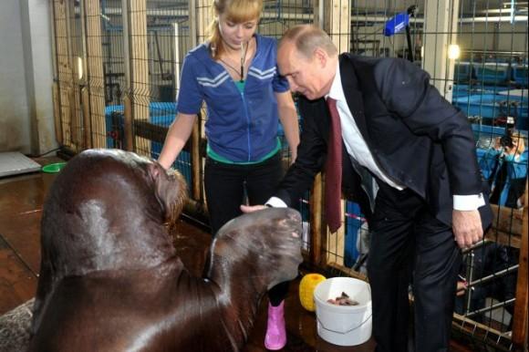 セイウチとプーチン大統領