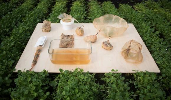 ゴミ問題に新たなる提案。紅茶キノコから食品用パッケージを作るというアイディア(ポーランド)