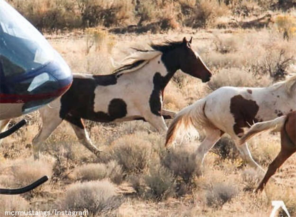 馬の模様が入った馬