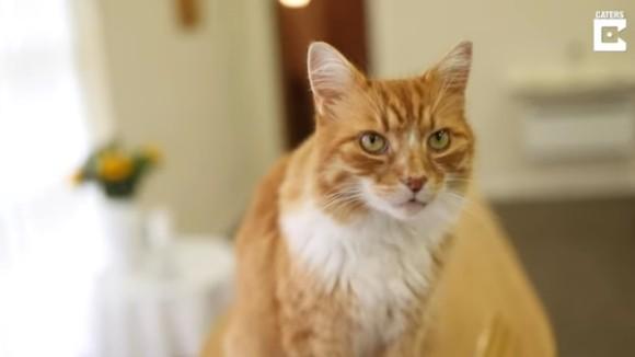 funeral cat2_e