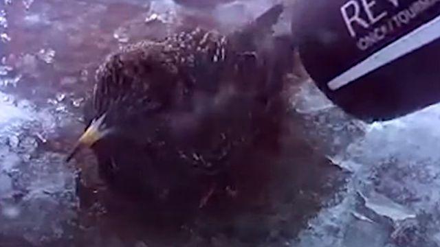 「絶対助けてあげるから!」雪の中、凍り付いた小鳥をドライヤーで助ける女性