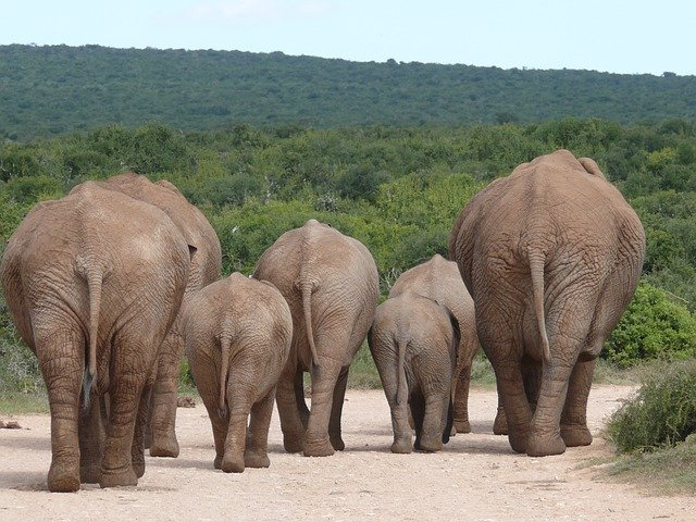 elephant-334456_640