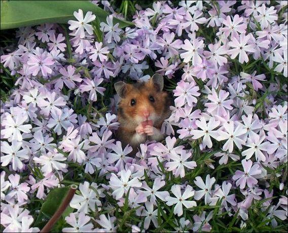 hamsters_10