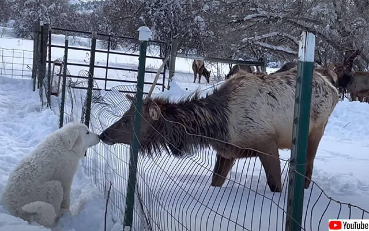 初対面の犬と鹿がキスのご挨拶