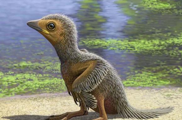 鳥の進化を解き明かす1億2700万年前のエナンティオルニスの雛(ヒナ)の化石