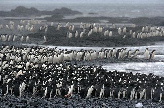 penguins_06