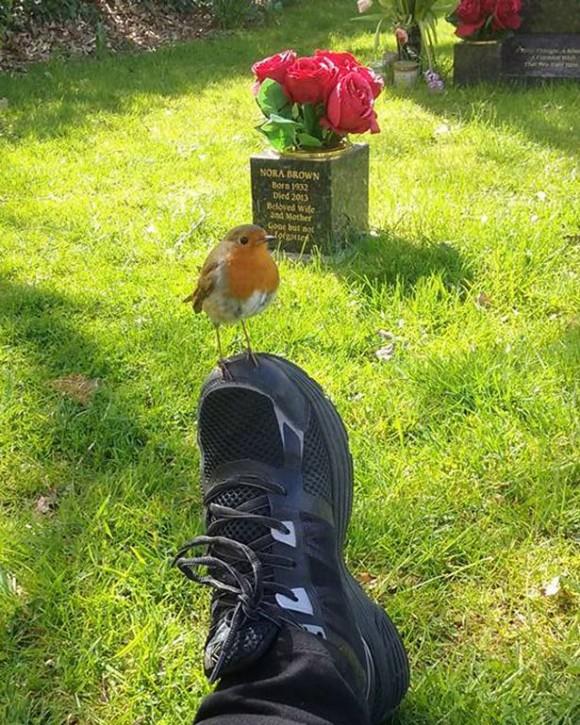 robin-on-foot_e