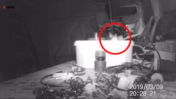 作業小屋の道具が知らぬ間に片付けられている。この謎を探るべく監視カメラをしかけたところ、驚きの結末が!