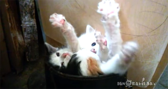 死んだ。3回萌え死んだ。3匹の子猫が長靴の中でくんずほぐれつ