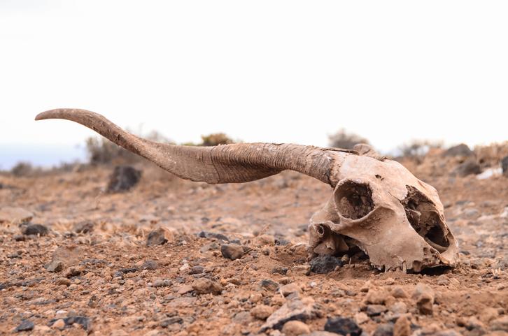 6度目の大量絶滅