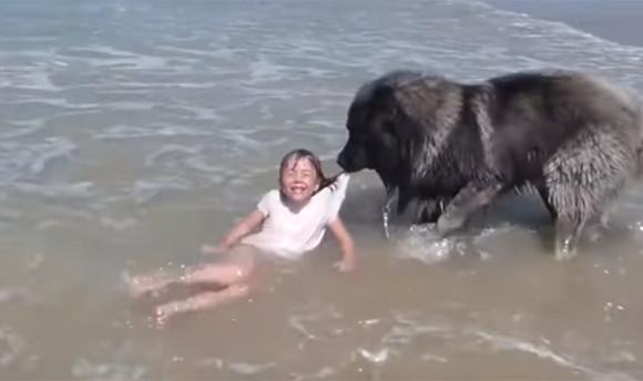少女が海で遊んでいたのをじっと見守っていた犬だったが、危ない!と判断。少女を海から救い出そうとする(フランス)