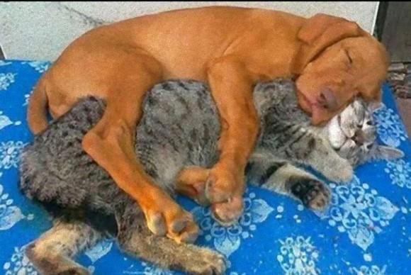 犬派とか猫派とか、そんな垣根いらないっしょ。だって犬と猫、こんなに仲良しなんだもの