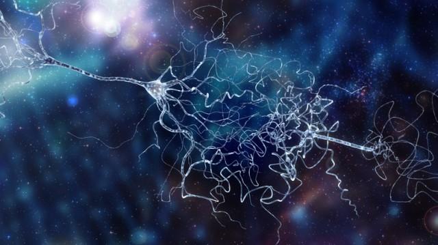 人間の脳に未知のシグナル送信経路があることが判明