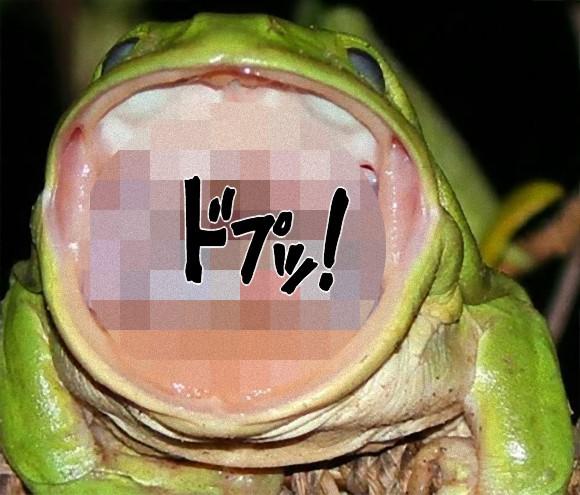 カエルの口の中には絶望の表情を浮かべたヘビ!この画像の真相を探る(ヘビ・カエル出演中)