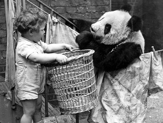 1938年、イギリスに初めてパンダがやってきた当時から振り返るイギリスとパンダ歴史的写真 カラパイア
