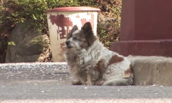 飼い主に置き去りにされた犬。以来10年間、再び飼い主が来るのを信じ、同じ場所で待ち続けている。